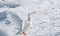 5 Pics That Prove Winter is Beautiful