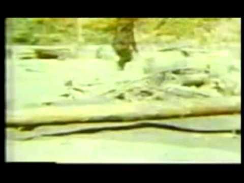 Bigfoot Compilation Video